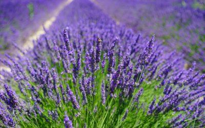 Parfums et bien-être : le pouvoir des odeurs