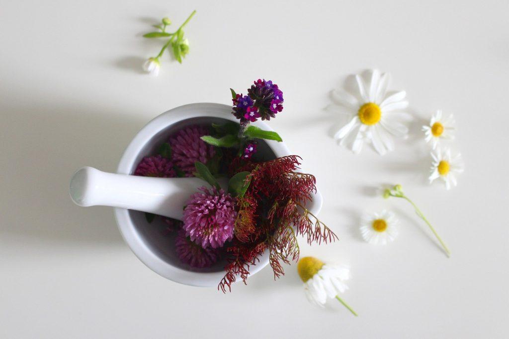 medicinal flower 4246073 1920